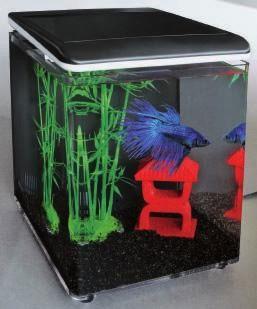 Aquaristik neuigkeiten bei schwaben aquaristik for Kampffisch aquarium