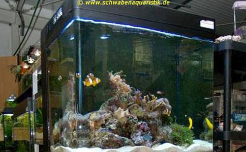 Aquaristik fachhandel f r zierfische koi kleintiere for Meerwasser aquaristik shop