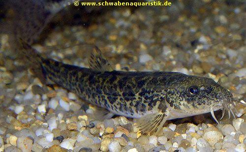 Aquarien zubeh r bilder goldfische teichfische for Teichfische versand