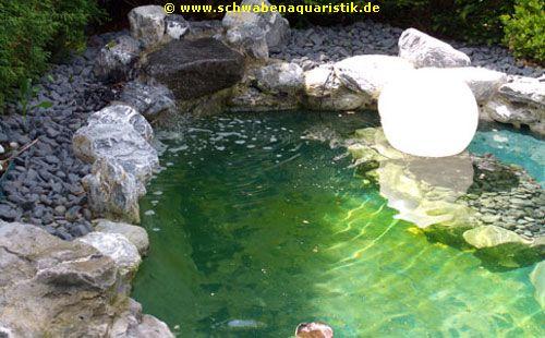 Forum zierfische koi kleintiere aquarien und teichzubeh r for Zierfische teich